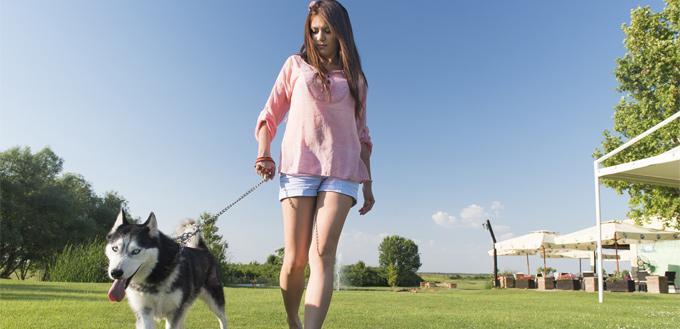 dogwalker with a husky