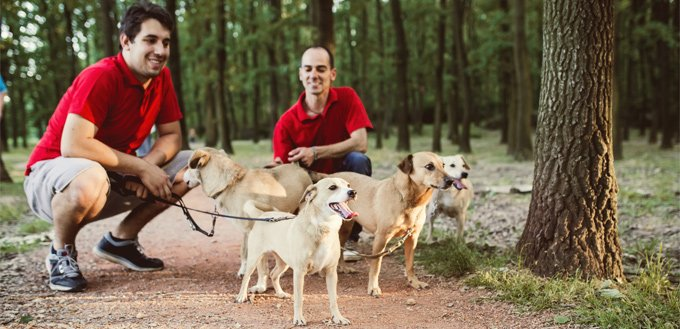 dogwalkers in the woods