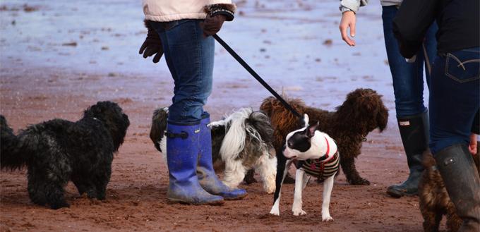 dogwalkers on the beach