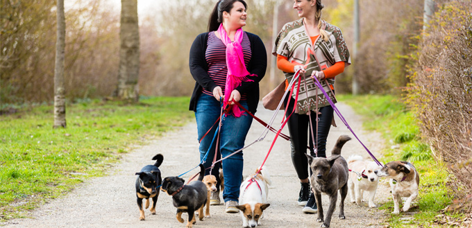 dogwalkers with experience