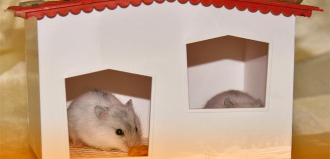 gerbil's housing