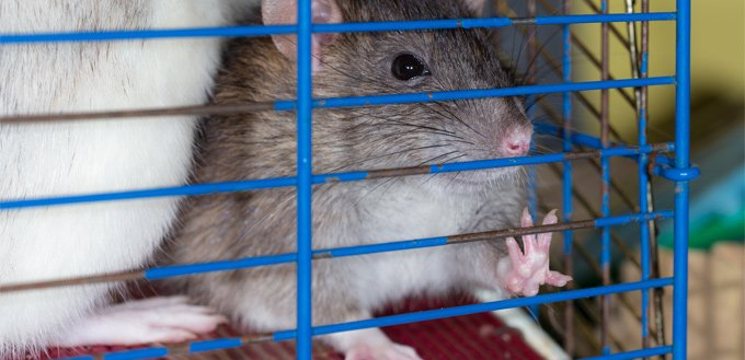 gerbil's wire cage