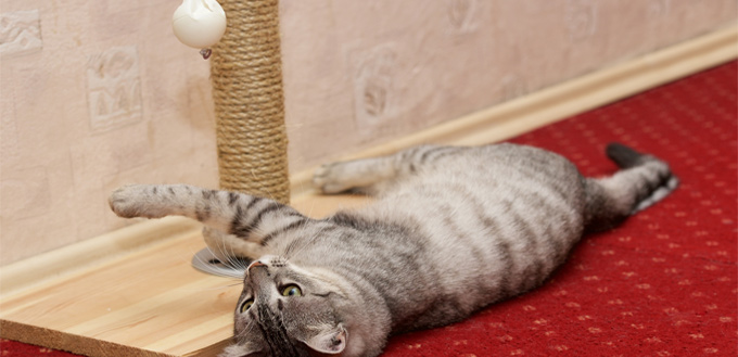 get creative with exercising a cat
