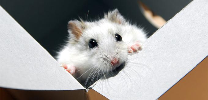 hamster box