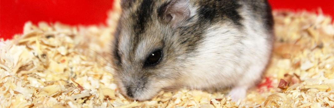 hamster supplies checklist