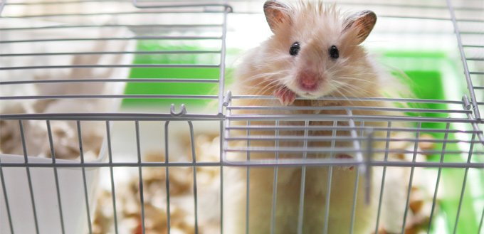 hamster wire cage