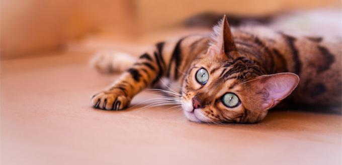 little begal kitty on the floor