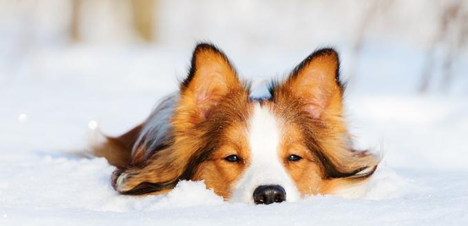 pooch enjoying winter