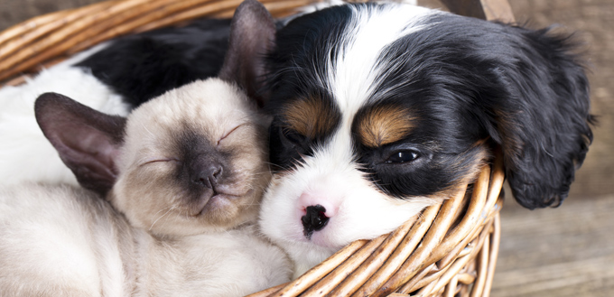 puppy and kitten in a basket