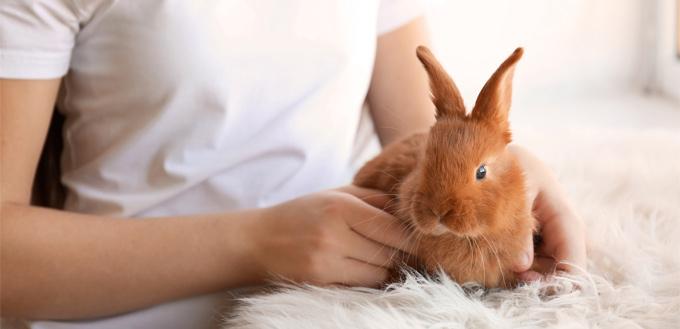 rabbit office pet