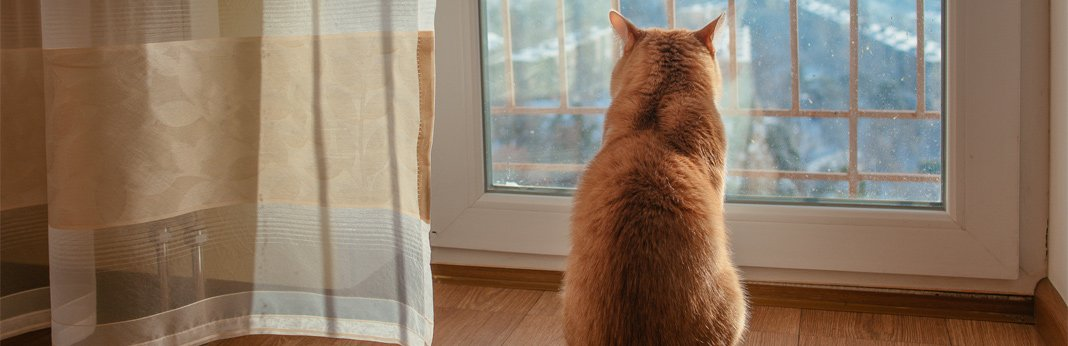 separation-anxiety-in-cats