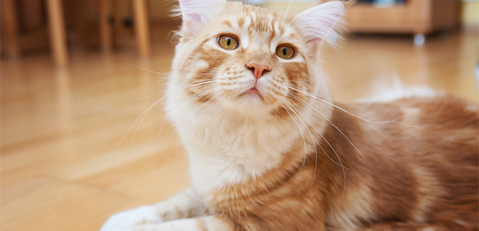 skin condition in cats