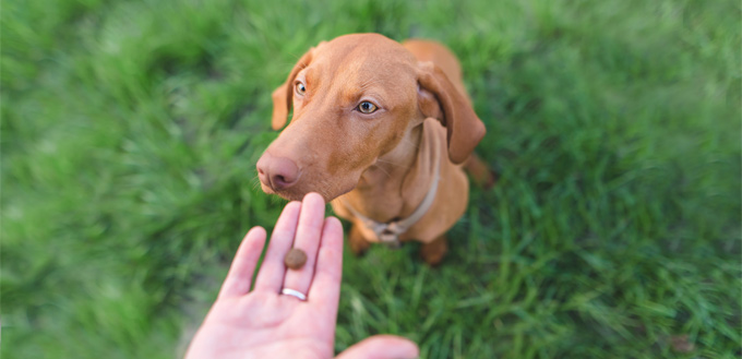 therapeutic nutrition for canines