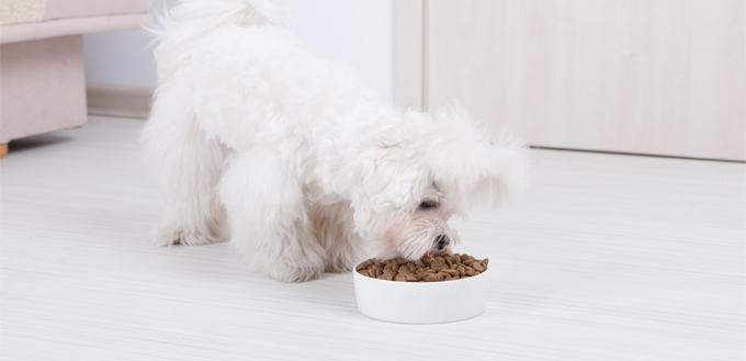 therapeutic nutrition for dogs