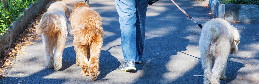 things you should know before hiring a dog walker