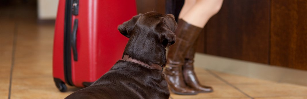 tips-for-safely-staying-in-a-hotel-with-your-dog