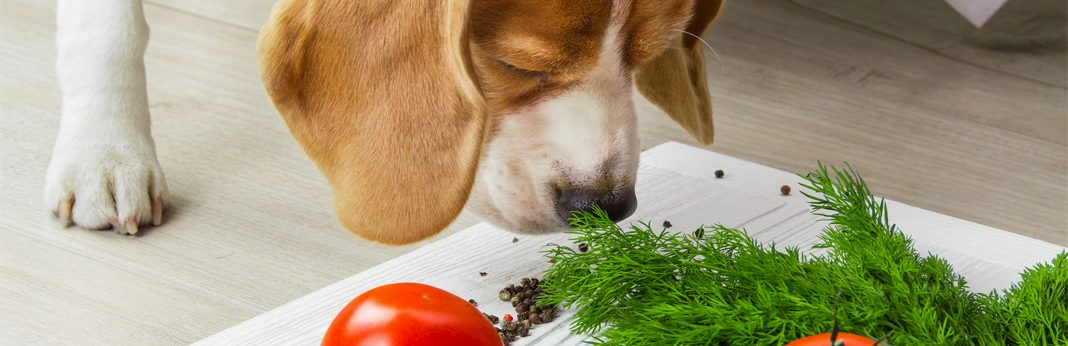 vegan dogs: is a vegan diet healthy for your dog?