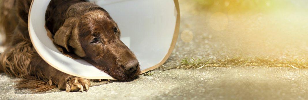 ways to provide mental stimulation after dog surgeries