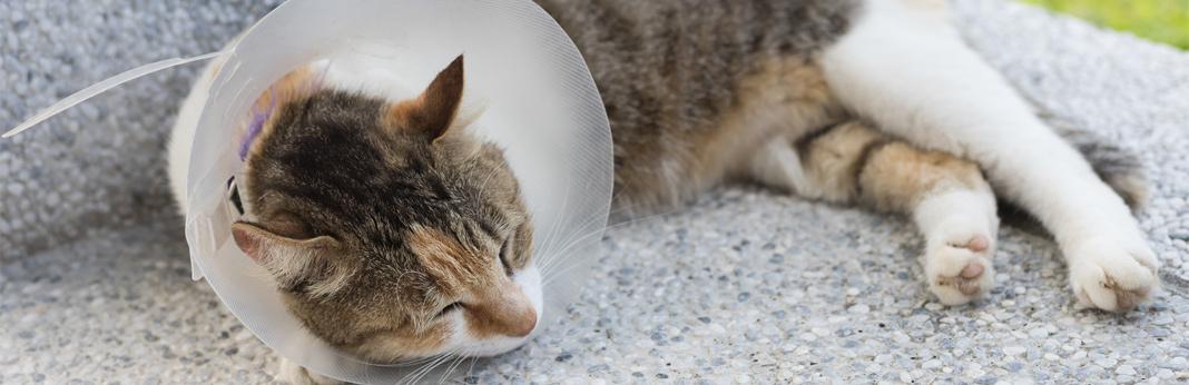what-is-cat-dermatitis
