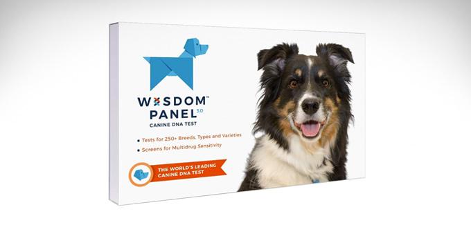 wisdom-panel-3.0-breed-identification-dna-test-kit