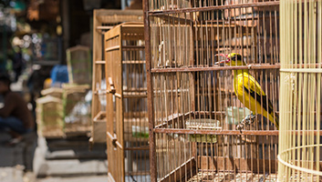 Best Bird Cages