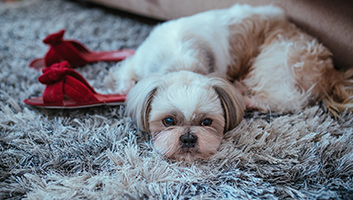 Best Carpet Cleaner For Dog Urine Buying Guide In 2019