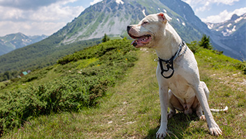 5 Best Dog Foods For Pitbulls Review Guide 2019