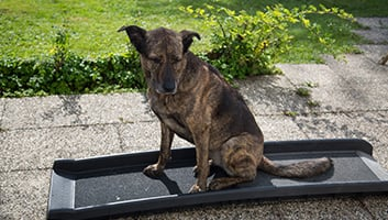 Best Dog Ramps