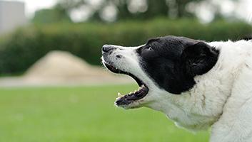 Best Dog Silencers