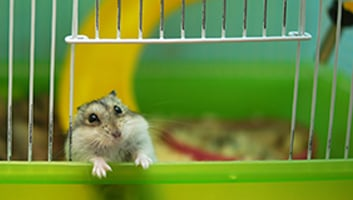 Best Hamster Cage Accessories
