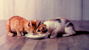 10 Best Kitten Foods For Your Cat Buying Guide 2019