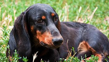 Best Senior Dog Foods