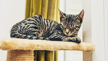 Best Cat Scratching Towers