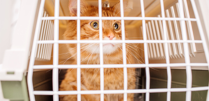 adoption cat in a pet carrier