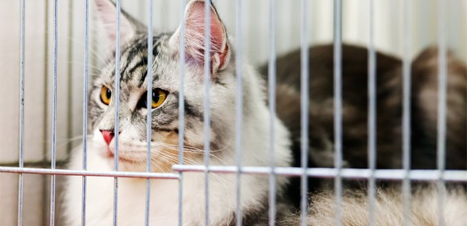 cat for an adoption in a shelter