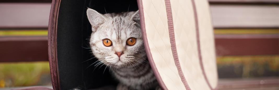 cat in a pet carrier