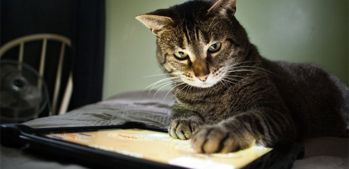 cat touching a tablet with its paw
