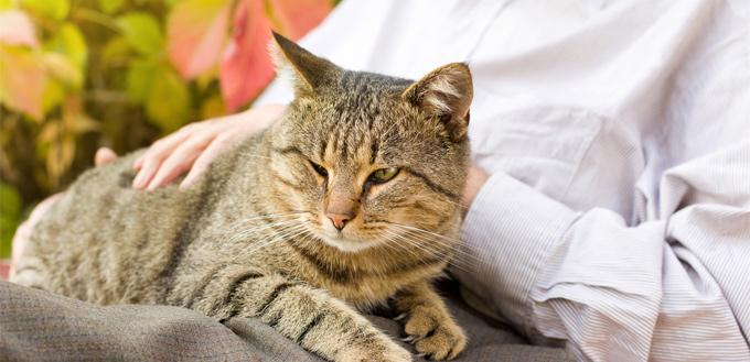 cat with dementia