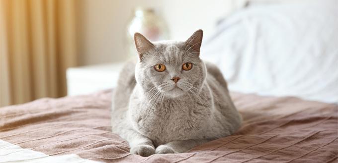 diabetes cat