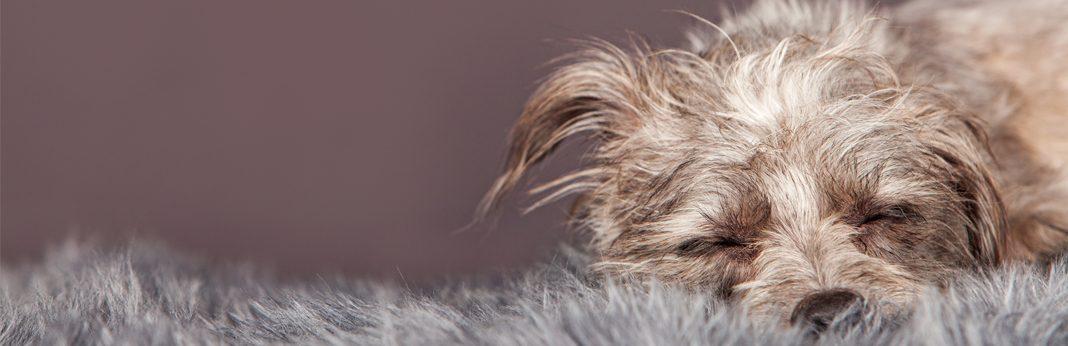 dog hairball