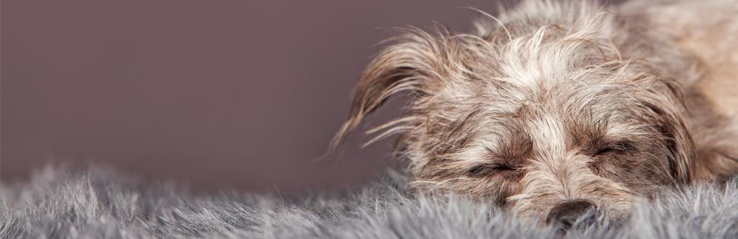 dog-hairball