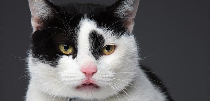 flehman response in cats