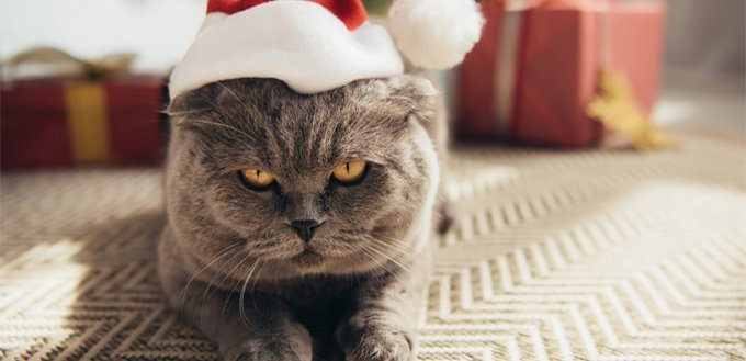 flehmen response in felines