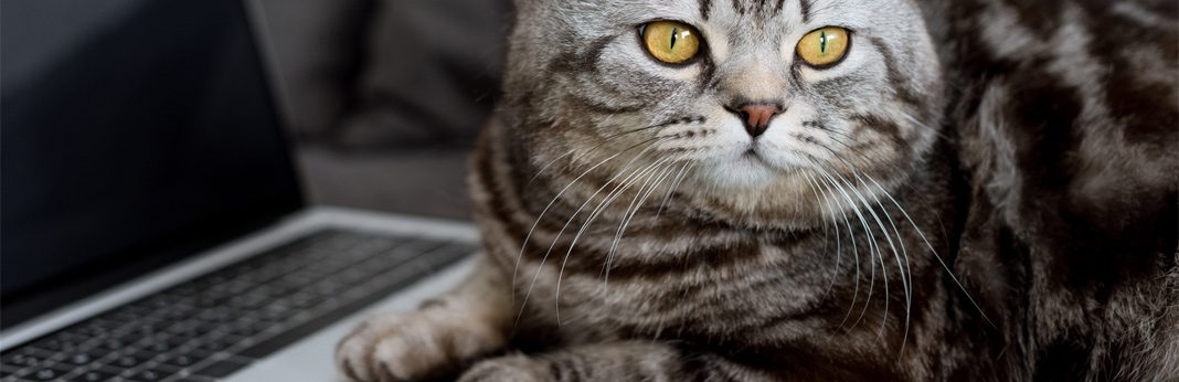 how to fix common tech issues caused by cats