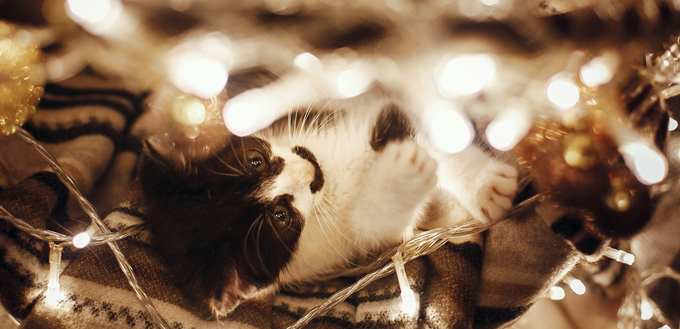 kitten playing with christmas lights