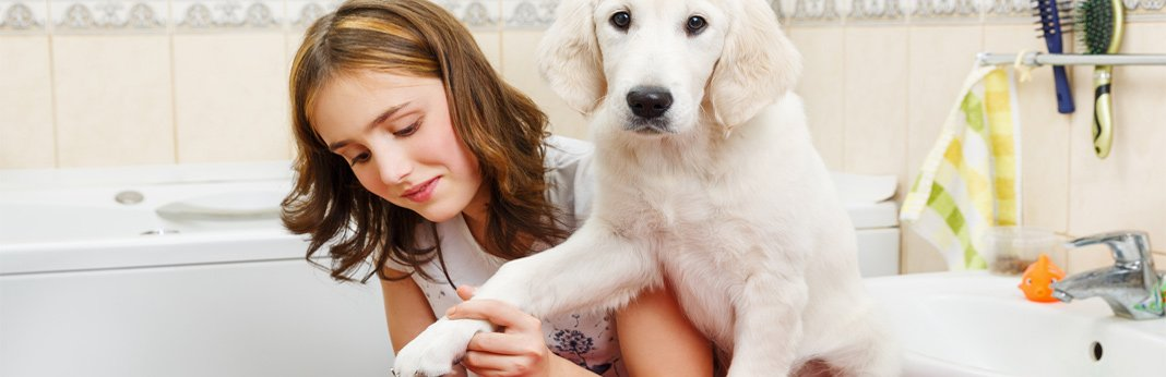 mobile-dog-grooming-cost