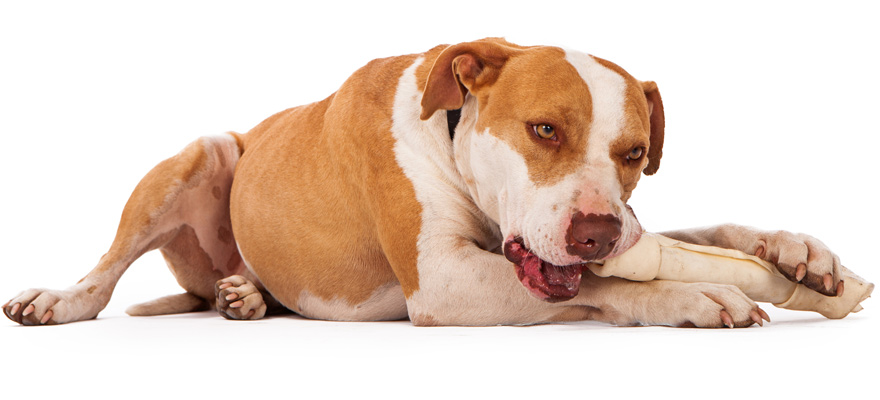 vegan chew for dogs