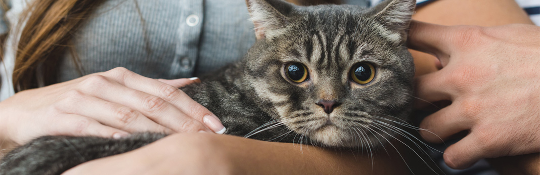what-do-cats-think-of-humans