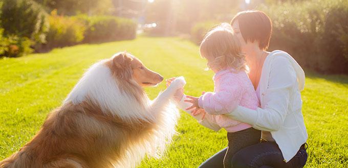 从生命的每日毒素中排除你的狗的5个技巧  我的宠物需要那个