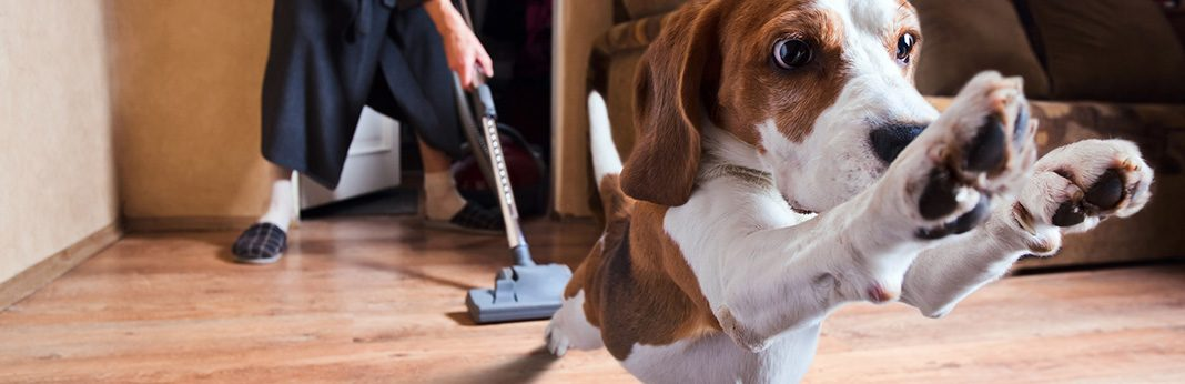 How to Protect Wood Floors From Dog Urine